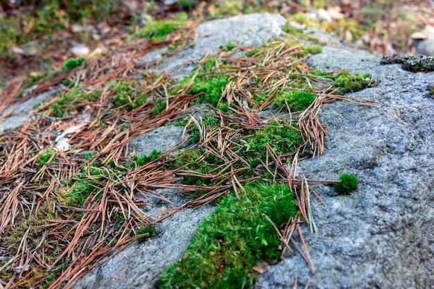 Трава под снегом мох под снегом зимний лес последний снег