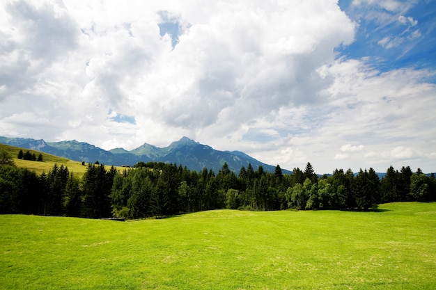 Травяная долина в лесу летом