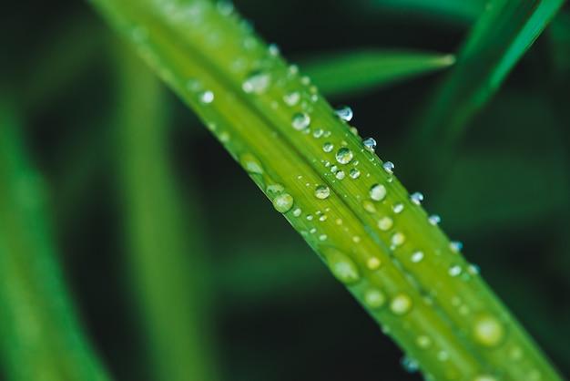 滴と草します。
