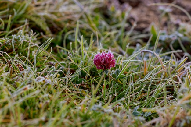 Grass with first frost, blurry background