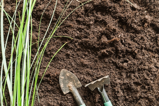 Grass with gardening fork and shovel on soil