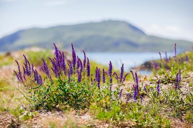 배경에서 바다와 산 뒤에 보라색 꽃과 잔디. 날씨가 맑고 흐린 하늘