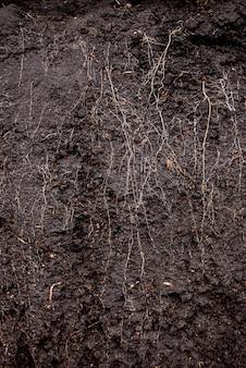 箱の中に根と土が入った草