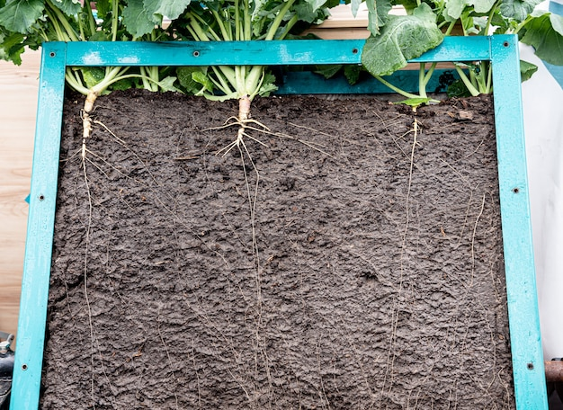 Grass with roots and soil in the box