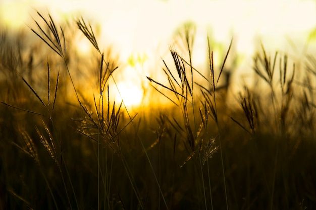 Grass with a warm light in the morning.