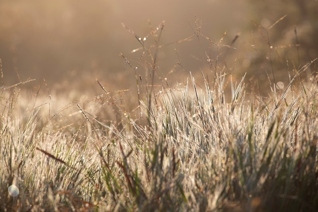 Grass with a warm light in the morning