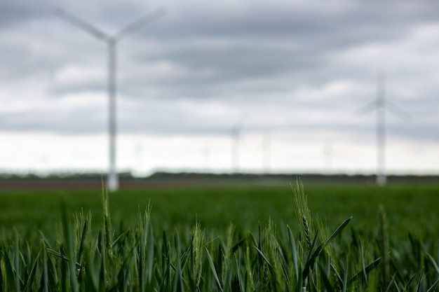 Grass with white windmills under a cloudy sky on a blurry background