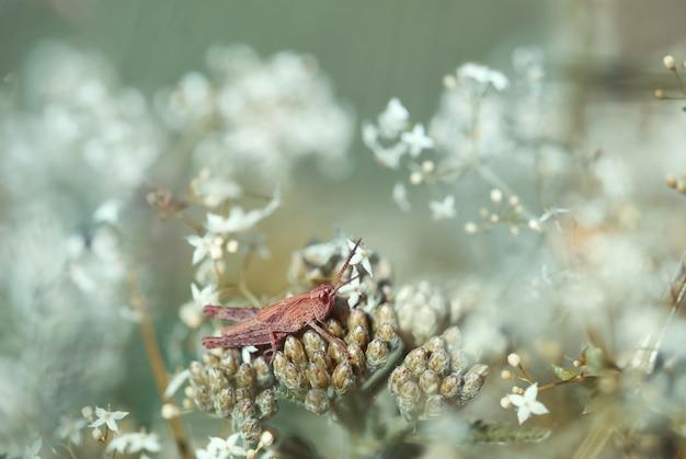 Grasshopper in dream garden.