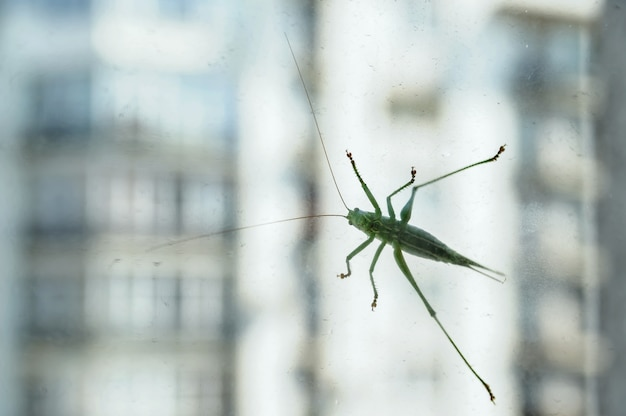 The grasshopper is on the glass.