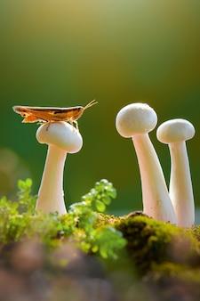 Кузнечик на грибе с зеленым фоном