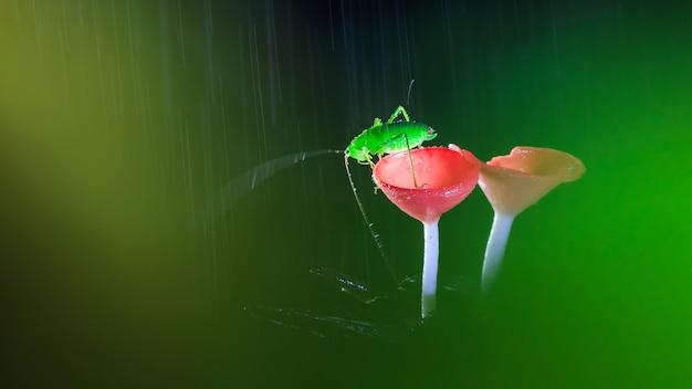 빨간 버섯에 메뚜기