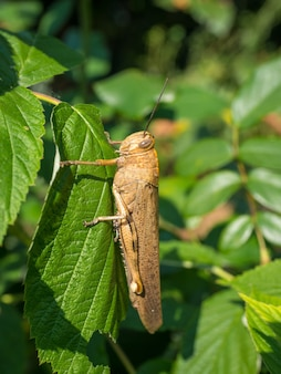 Grasshopper on a plant with green leaves