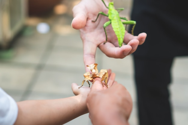 Grasshopper stick on kid and parent hand in the zoo