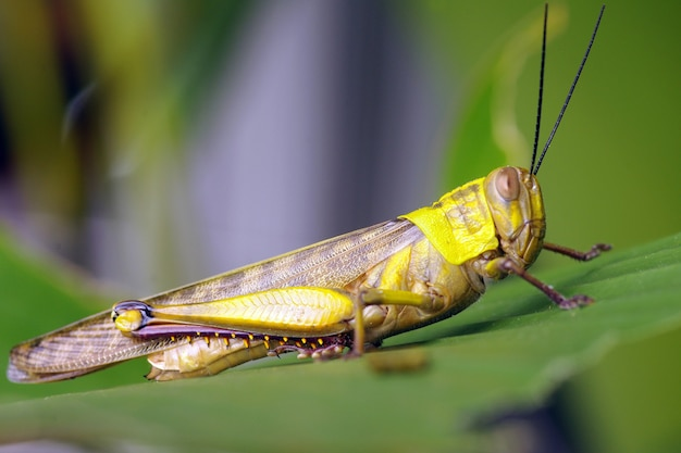 A grasshopper on a sunny morning