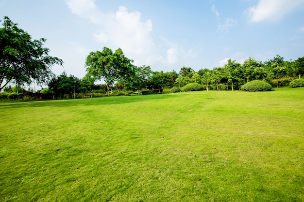 초원 풍경과 녹화 환경 공원 배경