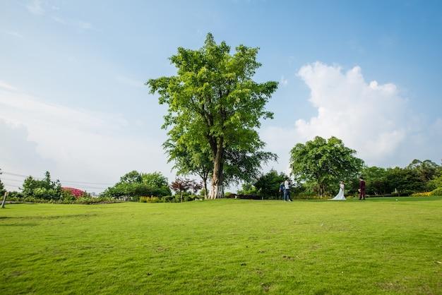 Grassland landscape and greening environment park background