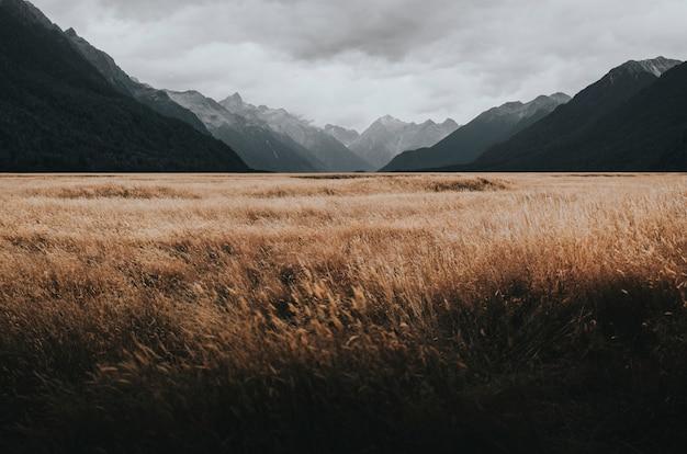 Grassland in milford sound, new zealand