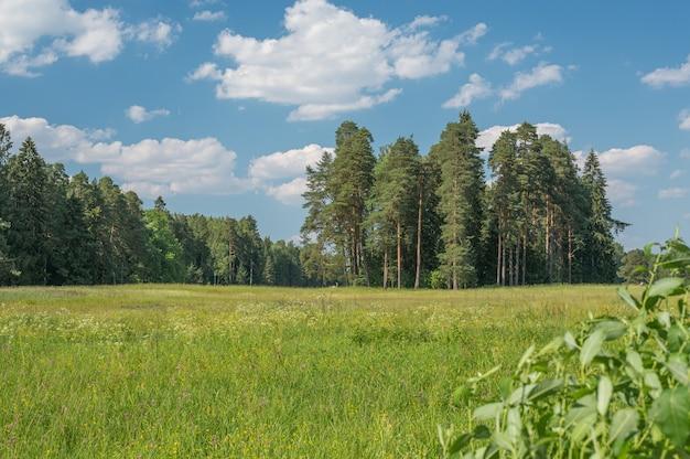 공원에서 초원 하늘과 잔디 배경입니다. 여름에는 야외에서 흰색과 노란색 민들레가 있는 녹색 들판. 낮에 밝은 녹색 여름 필드입니다. 초원 하늘