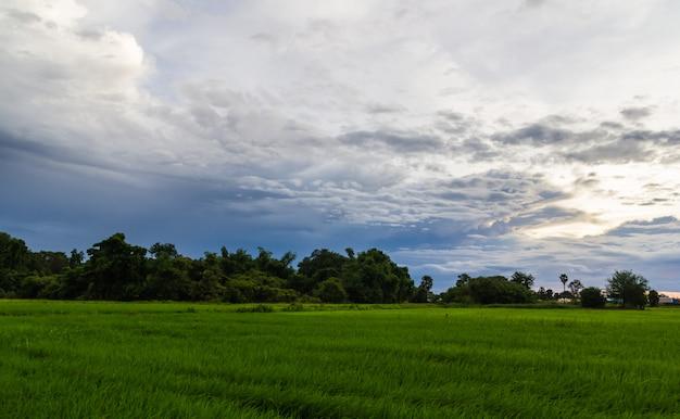 夕暮れ近くの雲と草原