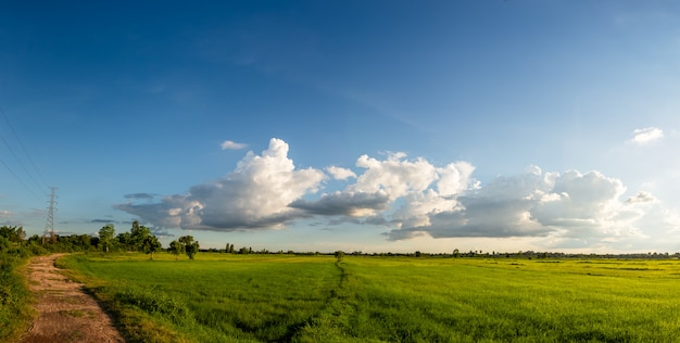 Grassland with dirt road in rural scene on blue sky background