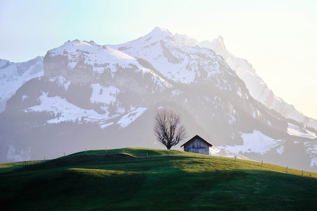 Grassy field with a house near a tree and a snowy mountain