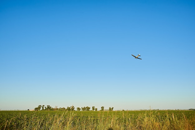 Grassy field with a plane flying over them in a blue sky