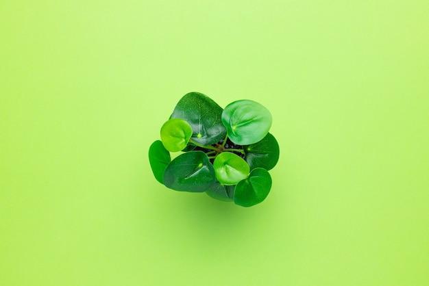 緑の背景の孤立した上面図の鉢に草が茂った緑のプラスチック植物
