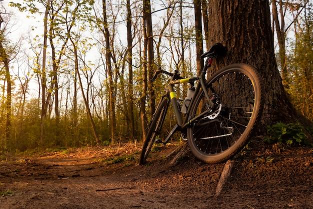 夕暮れ時の森の小道に木が立っている砂利自転車