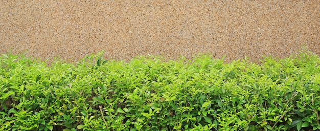 Gravel cement background with small decorative tree. focus at small tree background.