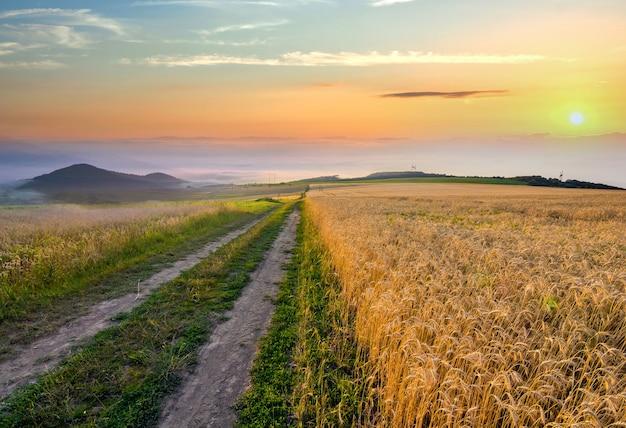 Гравийная грунтовая дорога между пшеничными полями, тянущаяся к далеким горам на горизонте