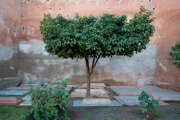 Graves in courtyard of saadian tombs, marrakesh, morocco