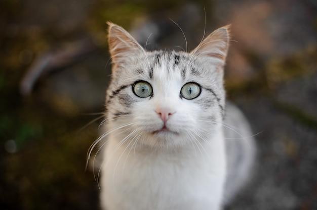 회색과 흰색 고양이는 바닥에 앉아 카메라를보고 두려워