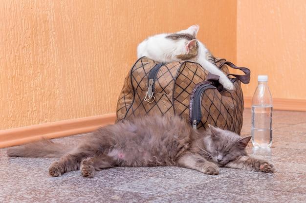 スーツケースとボトル入り飲料水を持った灰色と白の猫。駅で電車を待っています。旅行中にスーツケースを持った乗客