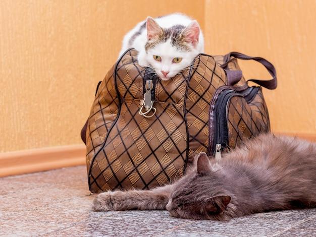 スーツケースと灰色と白の猫。駅で電車を待っています。旅行中にスーツケースを持っている乗客