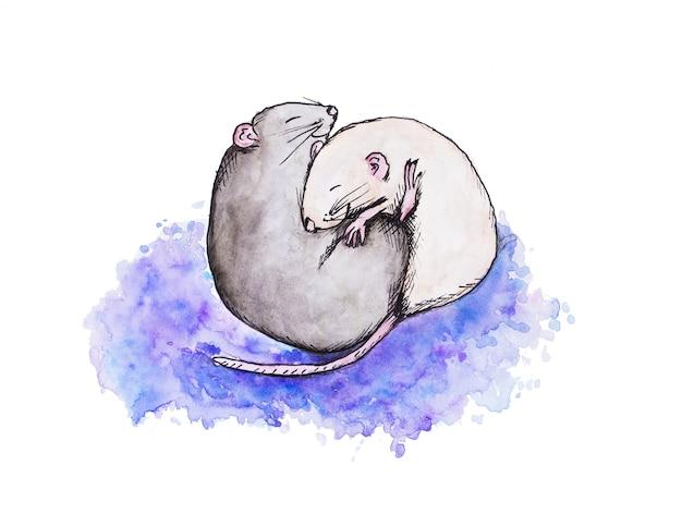 Серые и белые крысы обнимаются, спят вместе. акварельный рисунок.
