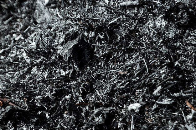 Gray background ashes, burned plants, abstract texture of coals and ashes