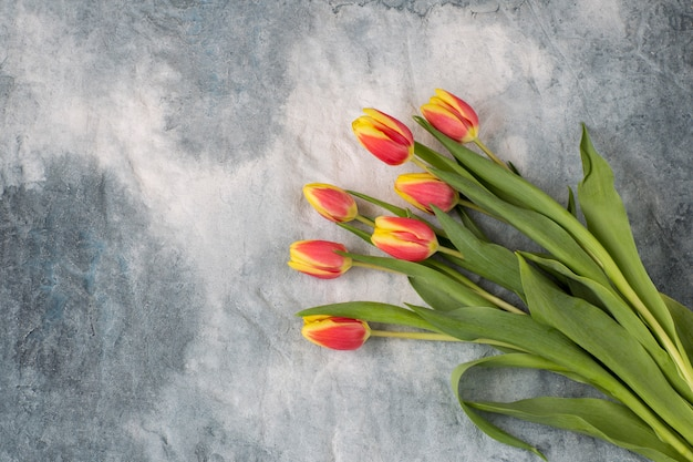 On a gray background a bouquet of tulips. free space for text