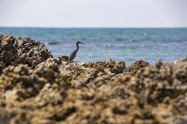 Серая птица на коричневой скале возле водоема