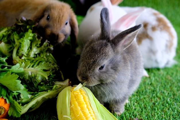 緑の芝生で果物や野菜を食べる灰色がかった茶色のウサギ。