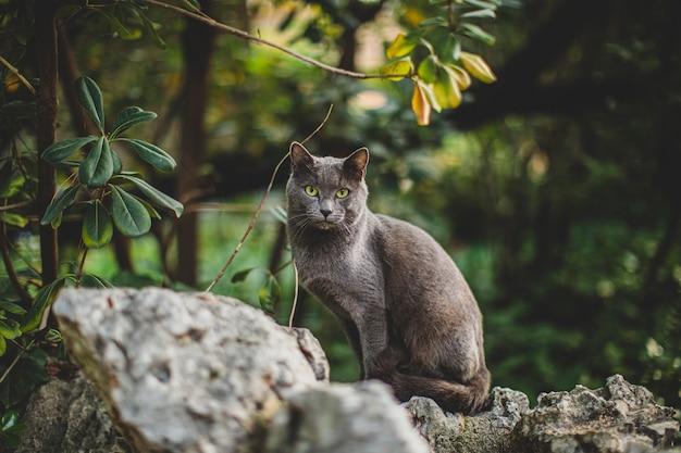 植生の中の灰色の猫