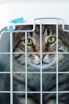 Gray cat in a cage for transportation