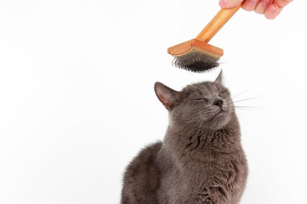Серый кот начесал шерстяную щетку на голове