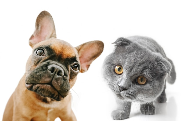Gray cat and dog with beautiful eyes