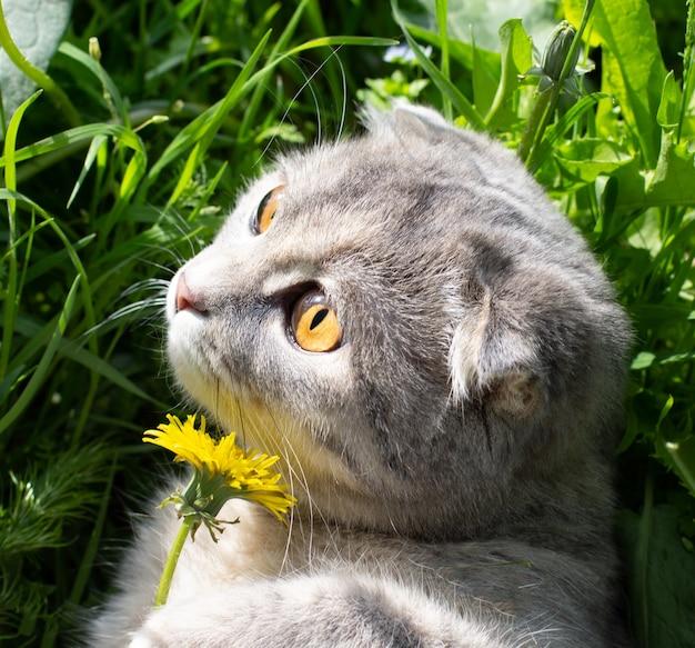 Серая кошка наслаждается летом на зеленой траве