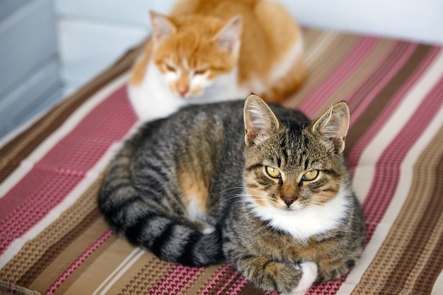 Gray cat and ginger cat lie on a striped pillow
