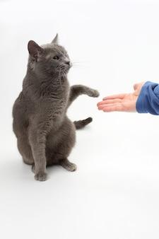 灰色の猫は人の手のひらに足を与える