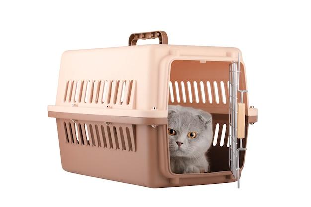 흰색 배경에 고립 된 갈색 동물 케이지에 회색 고양이