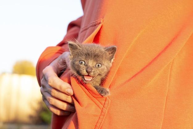 손에 회색 고양이입니다. 오렌지 옷 주머니에 앉아 웃는 새끼 고양이. 공간 복사