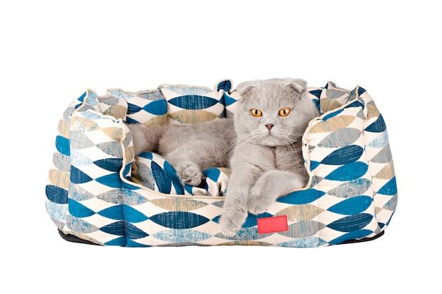매트리스 격리에 회색 고양이