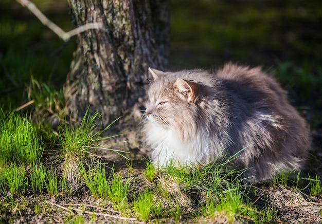 Серый кот в городском парке посмотрел на летающих птиц весной